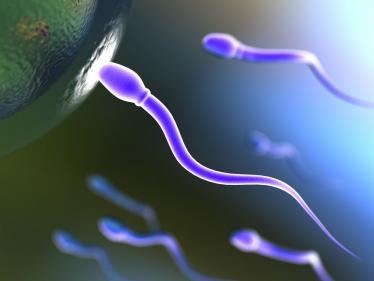 Pourquoi les idées sont comme des spermatozoïdes