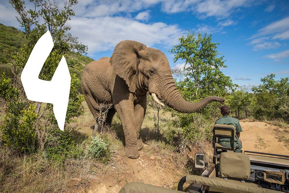 #VisiterL'Afrique